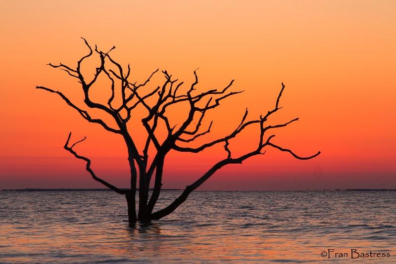 Botany Bay, South Carolina - ID: 14207779 © Fran  Bastress