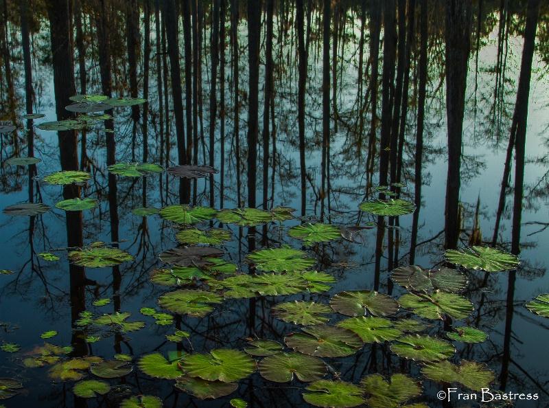Cypress Gardens, South Carolina - ID: 14209267 © Fran  Bastress