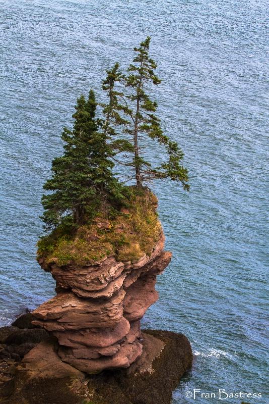 Fundy Trail, New Brunswick - ID: 14209270 © Fran  Bastress