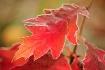 Autumn's Symp...