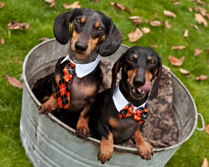 Tub Of Doxies