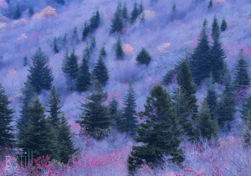 Transitioning into winter on the Blue Ridge