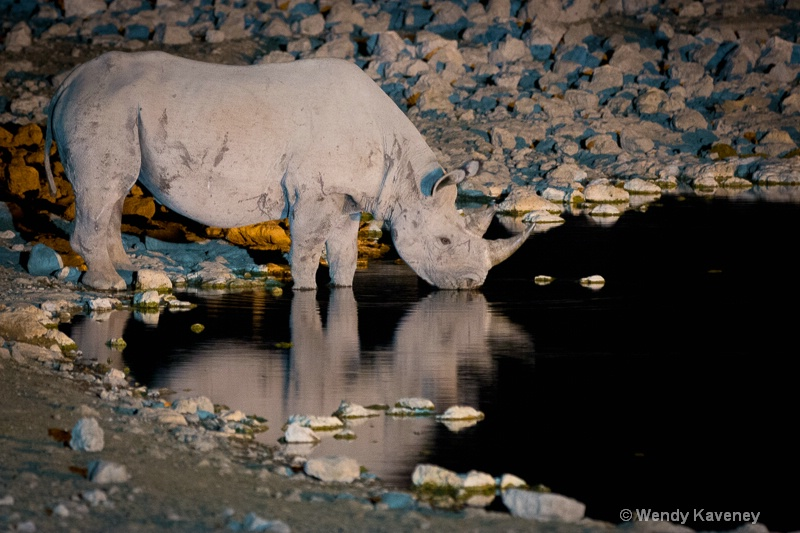 Rhino at Night - ID: 14229614 © Wendy Kaveney