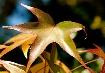 Amazing Leaf