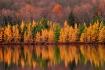 Autumn's Last...