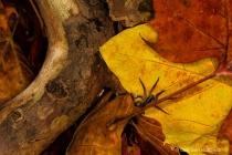 Autumn Scurry