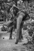 riding the elepha...