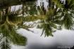 Palm Trees Reflec...