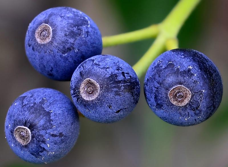 ~Winter Berries~