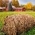 © Frank Silverman PhotoID # 14256728: Down on theFarm, Vermont