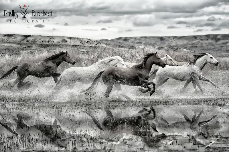Ranch Horse Run