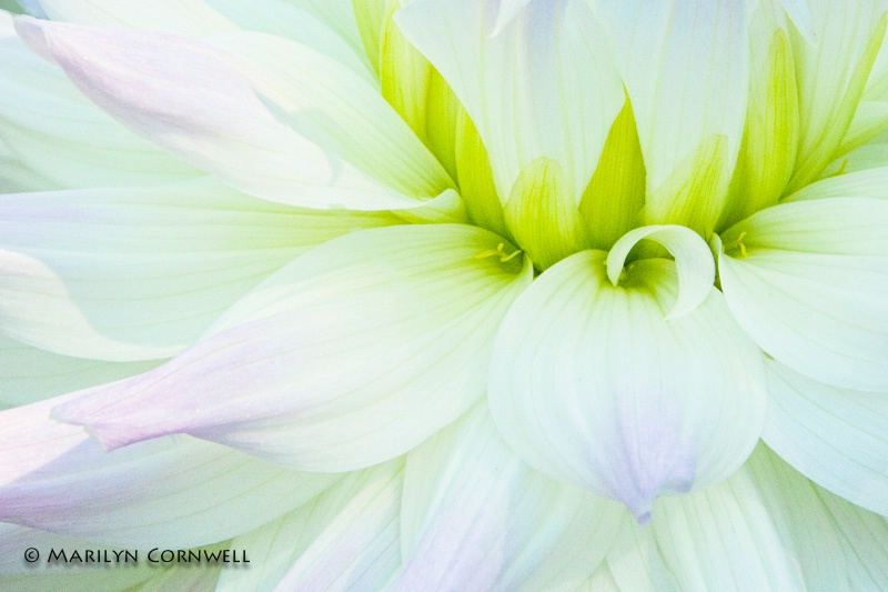 In New Light - ID: 14270866 © Marilyn Cornwell