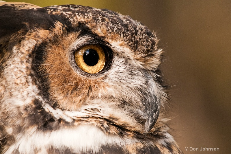 Great Horned Owl Profile - ID: 14271162 © Don Johnson