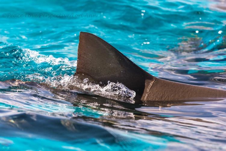 Swim Fin