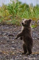 ranson syd lake clark cub