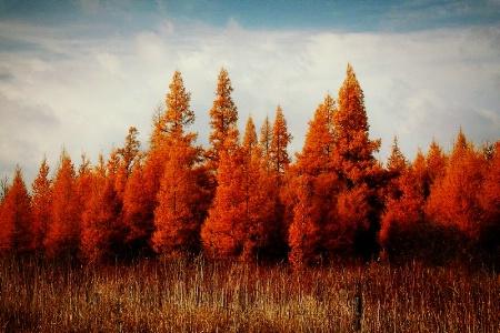 November Bands of Color