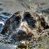 © Sheila Faryna PhotoID # 14278523: Swim Time