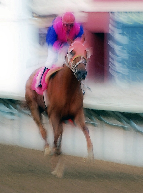 Thoroughbred Racing - ID: 14278705 © Sheila Faryna