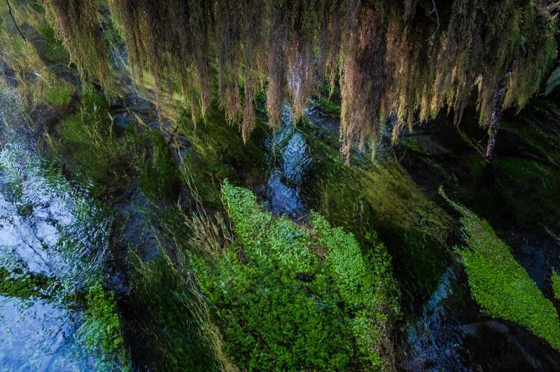 Hoh  rainforest 2