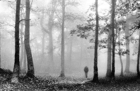 Woodland Soul