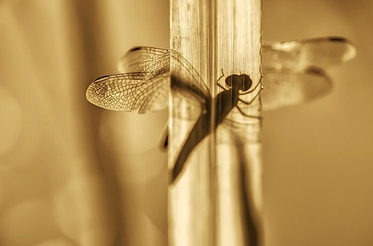 ~ Golden Silhouette ~