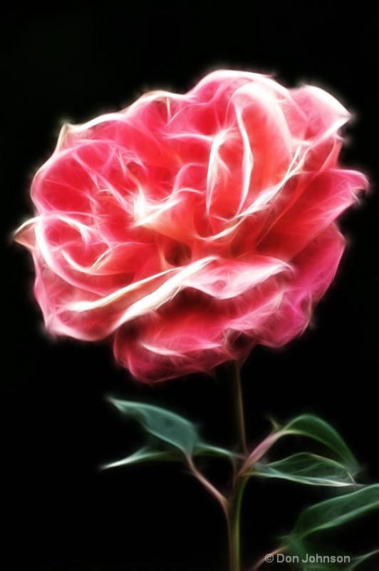 Single Rose-Fractalius - ID: 14294283 © Don Johnson
