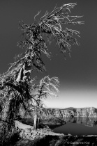 rugged tree after-8162