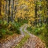 Country Road - ID: 14311045 © Kathleen Roughan