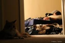 Pet Watch