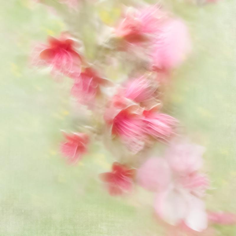 In My Dreams - ID: 14319056 © Marilyn Cornwell
