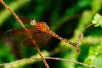 Dragon Fly @ Rest