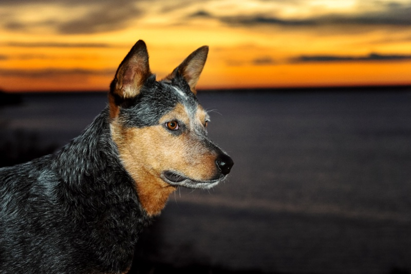 Spur at Sunset