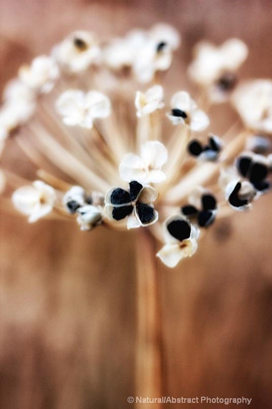 stray bits of emphera - ID: 14328500 © Natural/Abstract Photography