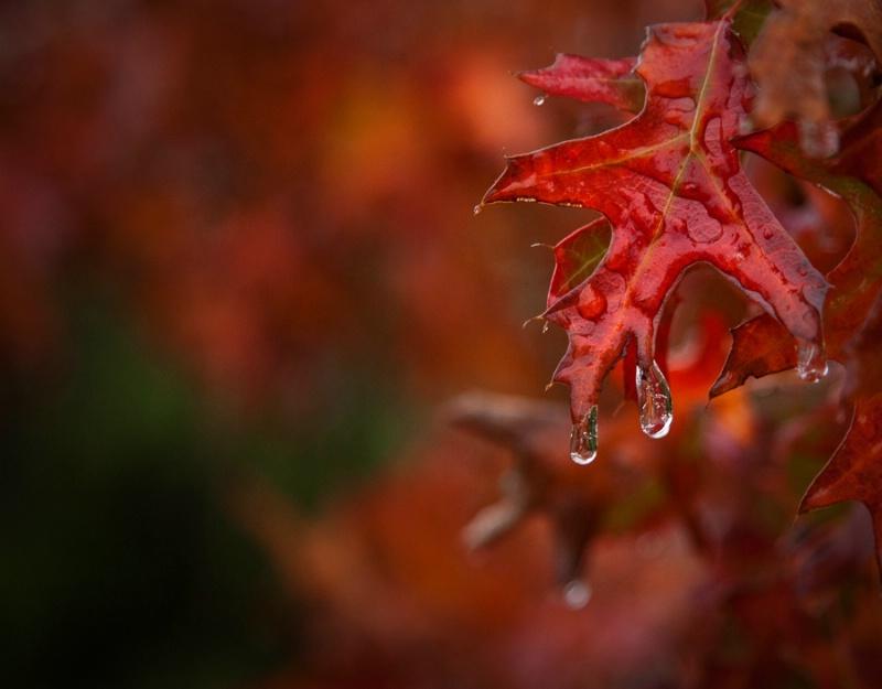 Freezing Rain #4