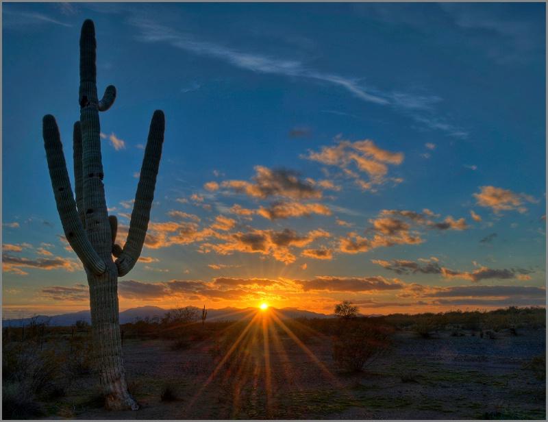 Cactus Sunset - ID: 14328940 © Kelly Pape