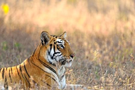 Tadoba Andhari Tiger Reserve-8