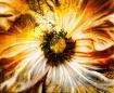 Bursting Sunny De...