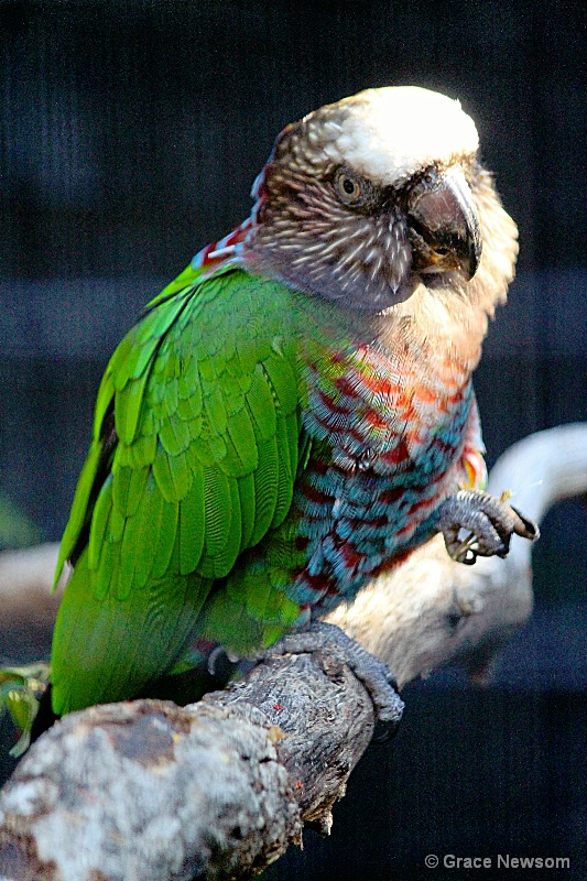 Parrot Pose - ID: 14341935 © Grace Newsom
