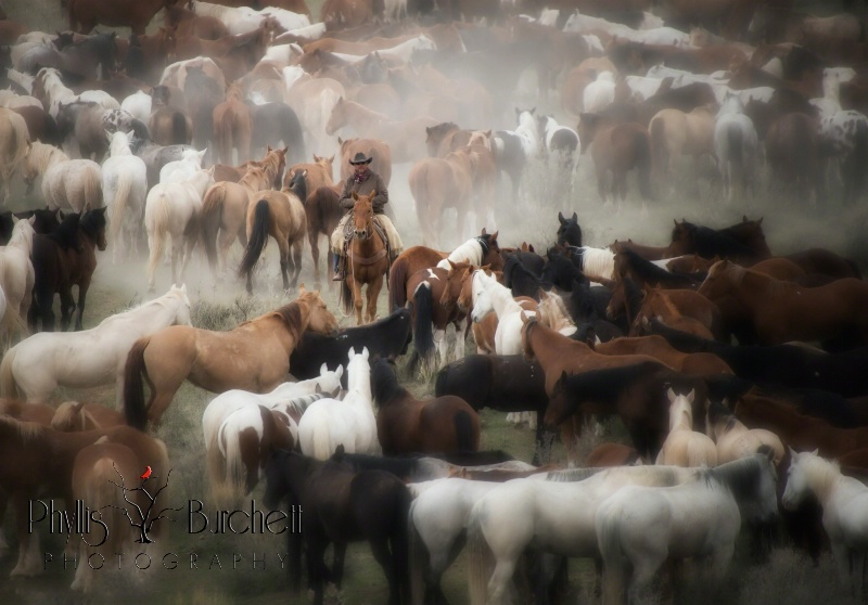 One With The Herd