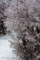 a frozen bush