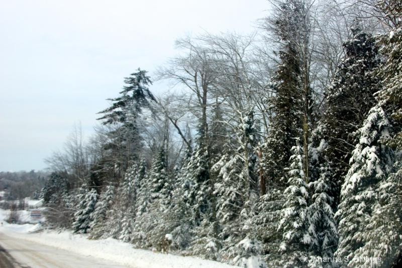 Roadside Trees - ID: 14346706 © Johanna S. Billings