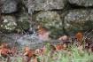 water to rock tvi...