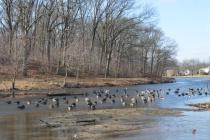 Duck Lake 1
