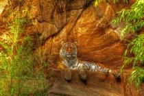 Magnificent Tiger