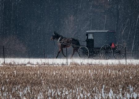 The Amish Way