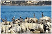 A Fine Flock