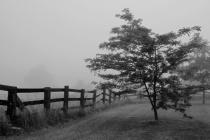 Foggy Morning Weather Alert