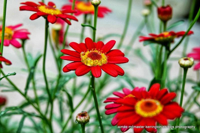 fleur petite