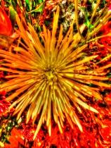 Flower-Optional