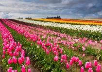 Across Colorful Fields